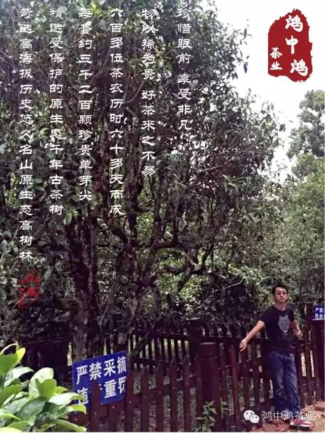 鸿中鸿凤凰古树红茶系列震撼上市!